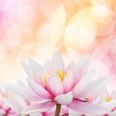 Lotus romantic Bokeh