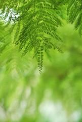 流れる様な植物の葉