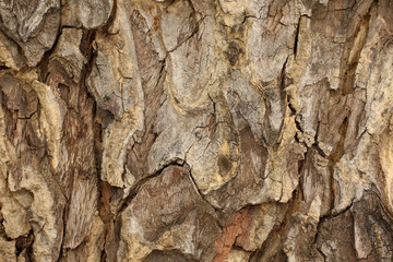 Tree bark detail, abstract background.