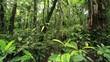 Interior of tropical rainforest, Ecuador