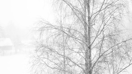 Wood and snowstorm