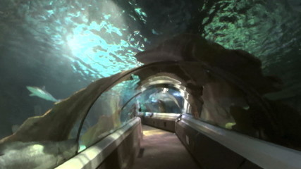 Large underwater aquarium tourist attraction.