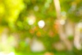 Summer background. Out of focus