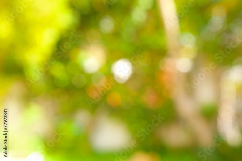 canvas print picture Summer background. Out of focus