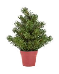 fir-tree in a red pot