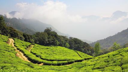 mountain tea plantation in Munnar Kerala India - timelapse 4k