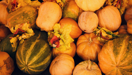 Assorted autumn pumpkins, squash and gourds