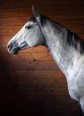 Purebred bay horse in stable door