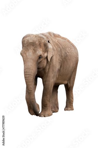 Aluminium Olifant Female elephant