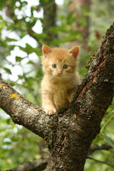 Adorable red kitten climbing the tree branch