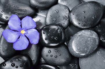 Flower oleander and stone. Zen and Spa.