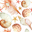 Corals with shells and crabs - 77993461