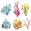 Corals with shells and crabs - 77993464