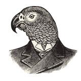 Mr.Parrot