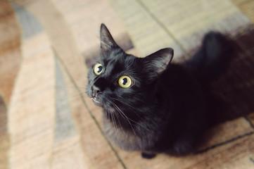 Black Cat on Carpet