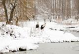 Storks on snow