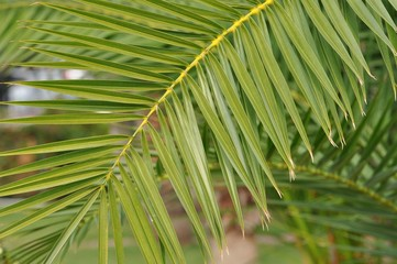 grüne Palmenblätter
