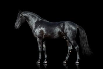 Black horse isolated on black background