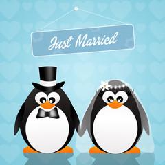 Wedding of penguins