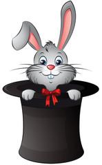 Zauberhäschen Kaninchen