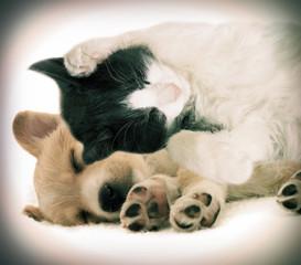 kitten and puppy