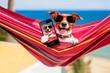 dog on hammock selfie