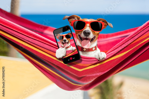 canvas print picture dog on hammock selfie