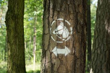 Reitweg im Wald