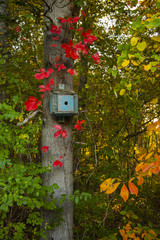 Leaves in Fall Colors surround Blue Birdhouse