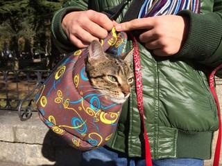 niño paseando a su gato en su cesta