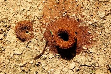 sandloch, Mungo National Park, New South Wales, Australia