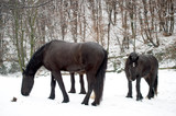 Cavalli nella neve 13
