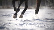 racehorse runs on snow,winter training,close up, slowmotion