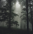 sun ray in foggy forest with green trees