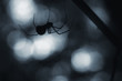 creepy spider silhouette at night - 78015888