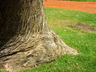 Zoom no tronco