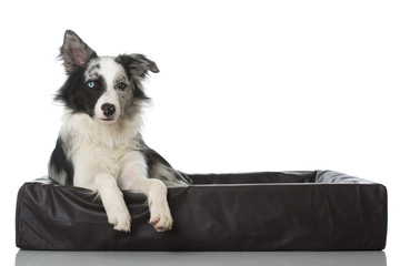Hund im Hundebett