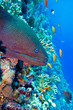 colorful coral reef with dangerous great moray eel
