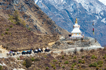 Yak on the trail  in Nepal