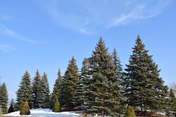 雪とモミの木
