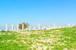 Landscape grass prospects the Roman ruins at Umm Qais in Jordan