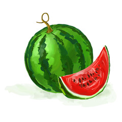 watermelon vector illustration  hand drawn  painted