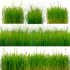 Frisches Gras, freigestellt vor weißem Hintergrund