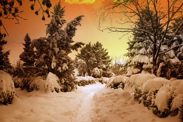 beautiful sunset in snowy woods