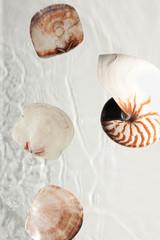 Muscheln und Schnecke