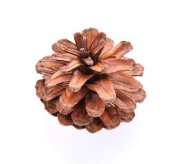 pinecone isolated on white