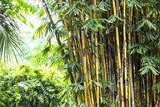 Fotoroleta bamboo grove in the jungles of the Philippines