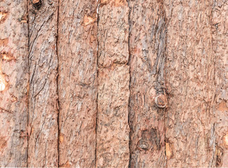 Bark of wood texture for background