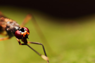 close-up extreme macro little insect soft focus details nature b