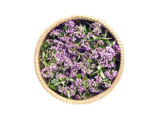 oregano wild marjoram (Origanum vulgare) medical flowers